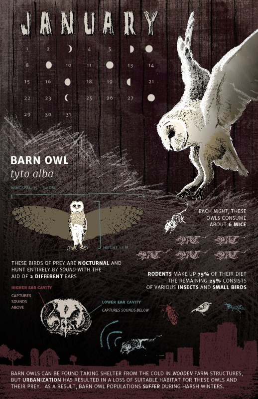 JessicaDryden_BarnOwl_Final